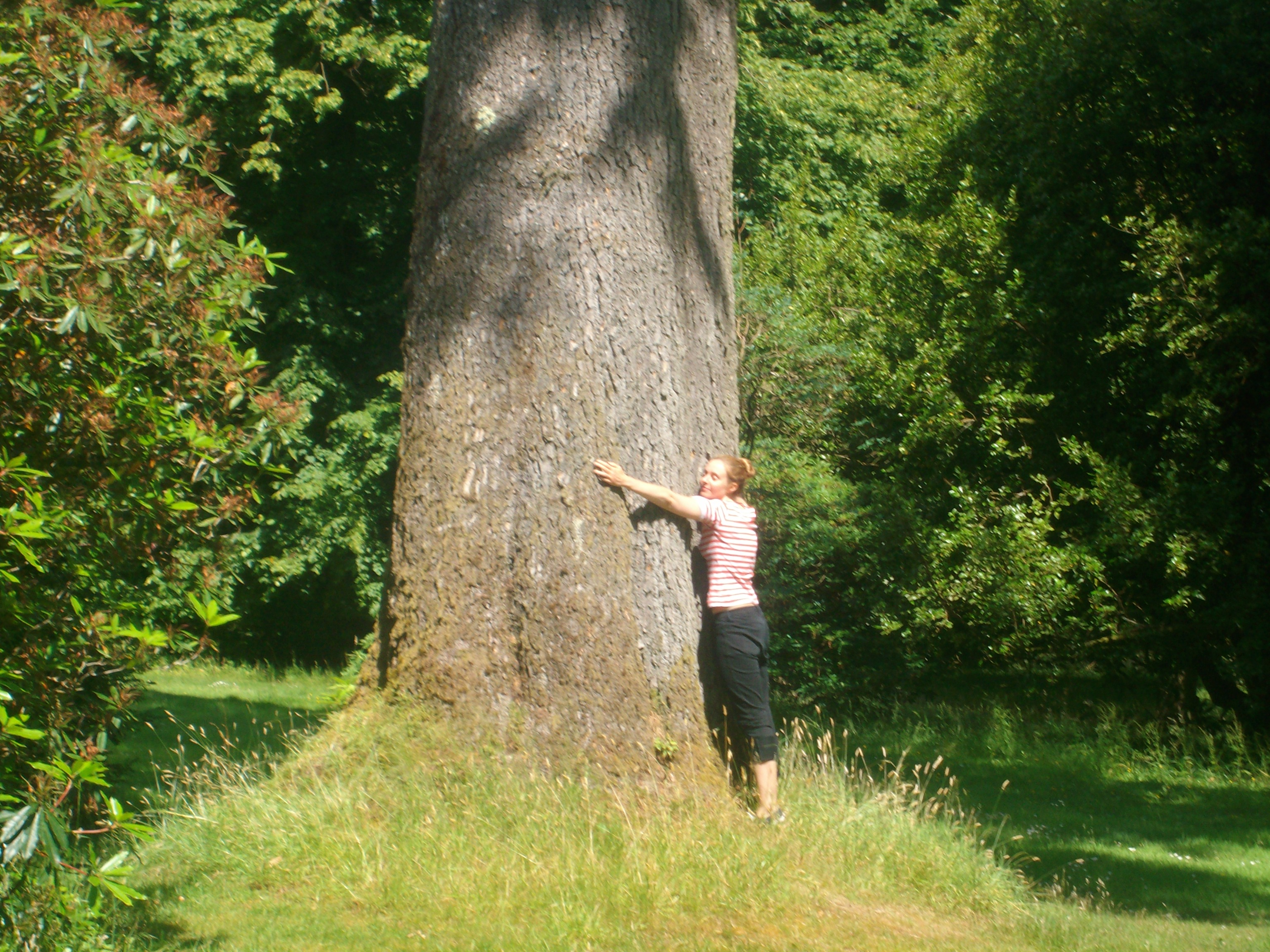 Best Reason To Hug A Tree Today They Save 850 Lives A Year. (Feel The Love)
